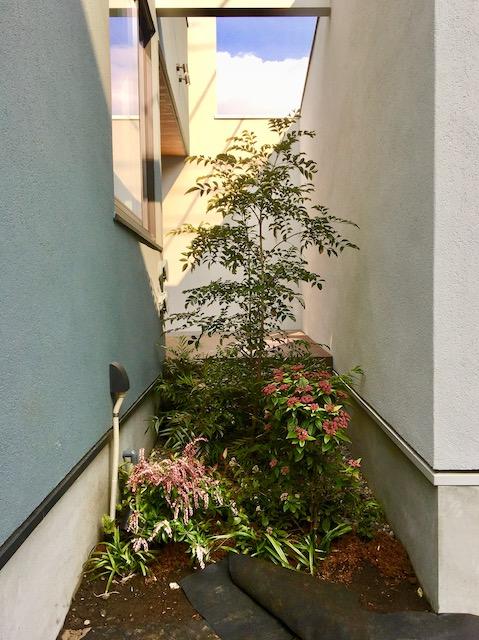 練馬区注文住宅の坪庭の写真